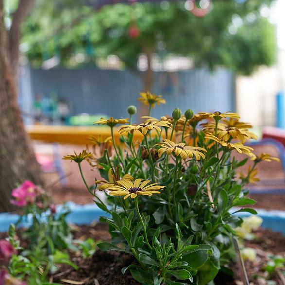 CleverKids-yard-flowers_edited.jpg