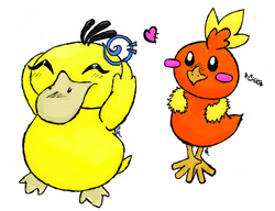 torchic and psyduck
