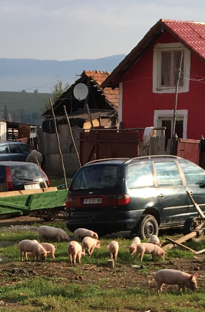 Those piglets...