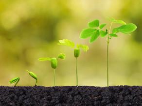 Blogeintrag: Social Entrepreneurship