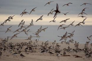 Орнитологическая безопасность полетов