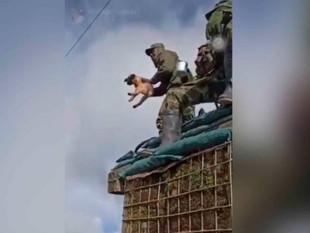 Colombia: soldado lanza al vacío a un perro