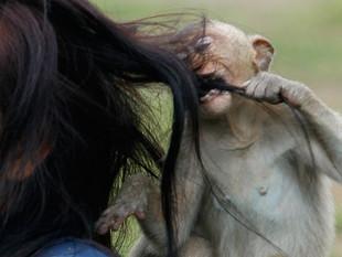 Un mono ataca en directo a una presentadora de televisión