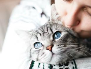 Así funciona MeowTalk, la aplicación que traduce los maullidos de tu gato para entenderlo mejor