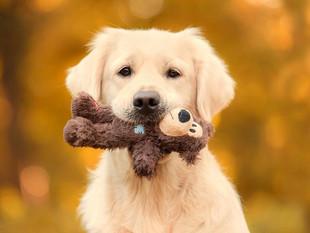 Así es cómo tu perro puede sanar la tristeza en tu corazón