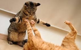 Dos gatos se roban el protagonismo de la transmisión en vivo de una periodista