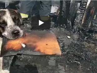 Un perro llora desconsolado luego de que un incendio destruyera su hogar