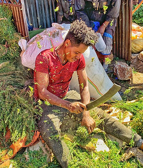 Ethiopia guy chopping herbs.jpg
