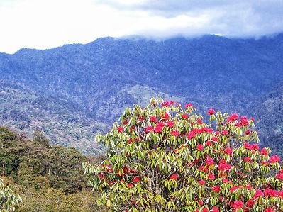 Bhutan rhodo and mountain.jpg
