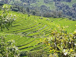Bhutan terraced green fields.jpg
