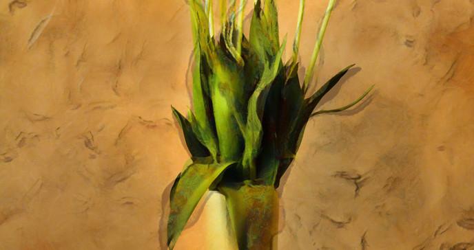 Orange Tulips_JeffCovington.jpg