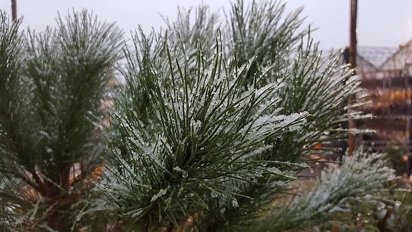 Arbustes.jpg