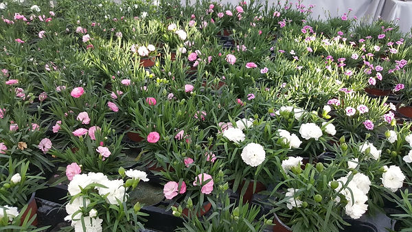 Les Serres_Nos plantes.jpeg