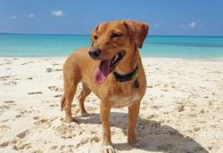 long dog anguilla