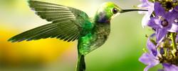 Anguilla Green Bird