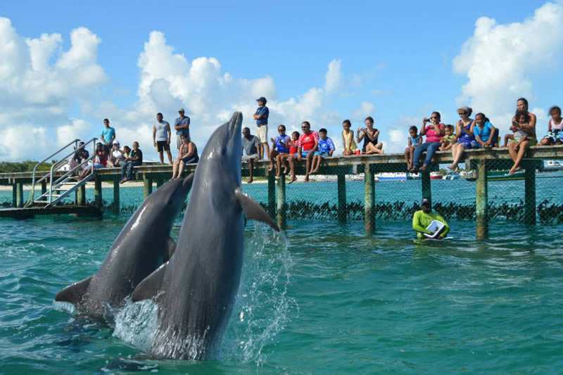 Anguilla Dolphin Experience
