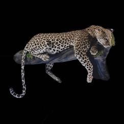 Full Body Leopard Mount