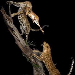 Double Leopard Fully Body Mount Kill