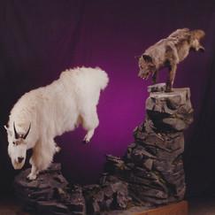 Mountain Goat / Wolf