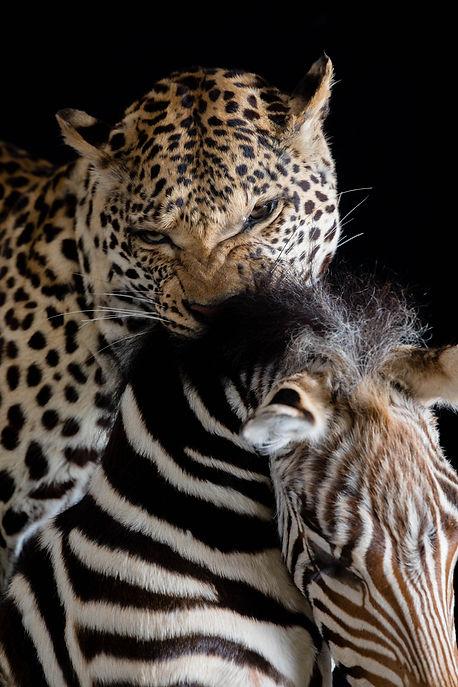 Woodbury, Taxidermy, Wild Game Processing, Cheetah, Hunting, Exotic Animals, Hunt