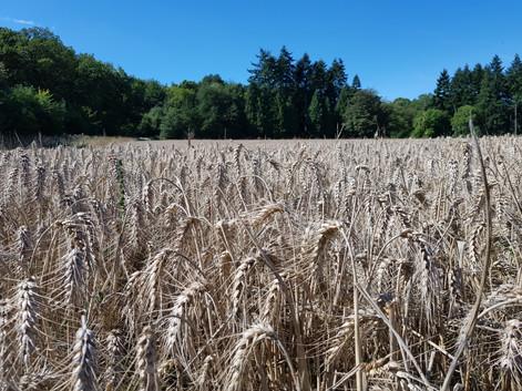 barley....what else