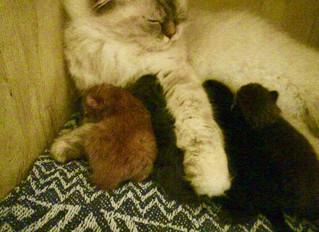 Ungarna äter och äter och sover och sover och växer och växer..........