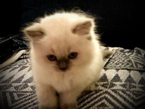 En katt kan bli din!