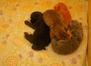 Kattungarna blev en vecka igår!
