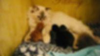 IMG_Family puss på rödspotten.pg.jpg