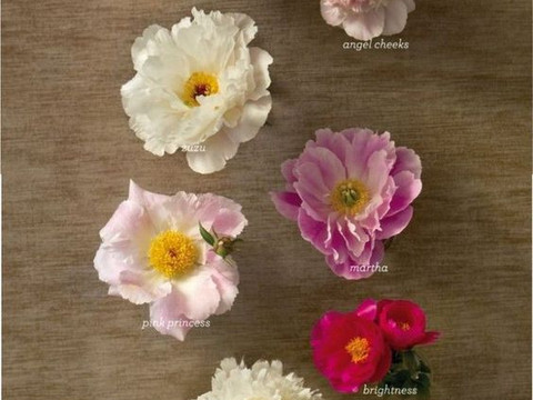 Floral Inspiration: Peonies