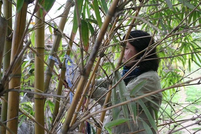 Bamboo Temple 3a.jpg