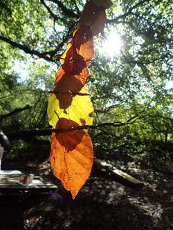 Leaf Art Autumn
