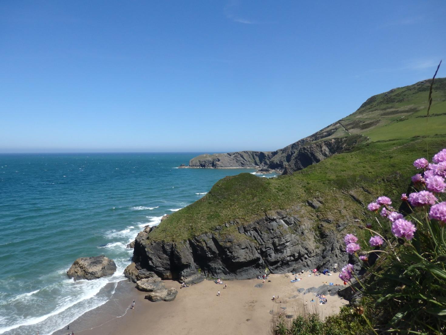 Coastal Foraging