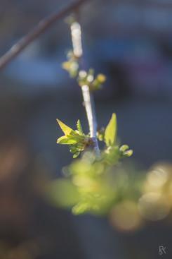 Keväänkorvalla