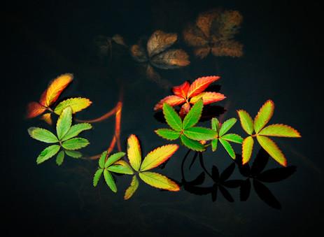 Color_003.jpg