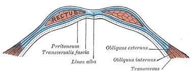 Fisiologia del retto addominale: la distinzione fra alto e basso ha un fondo di verità?