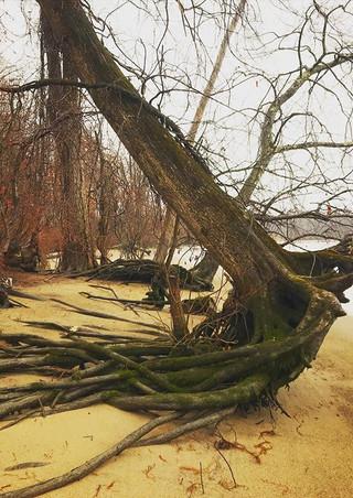 #hudsonriver #rootplate #walkonthewildsi