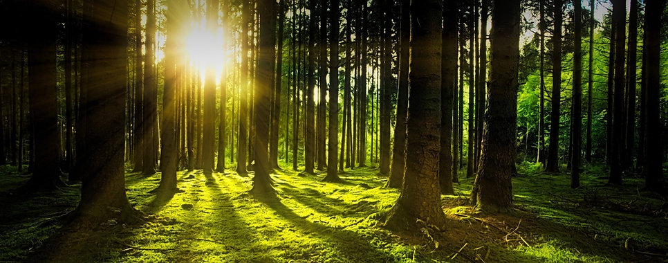 nature-3294681_1920_edited_edited.jpg