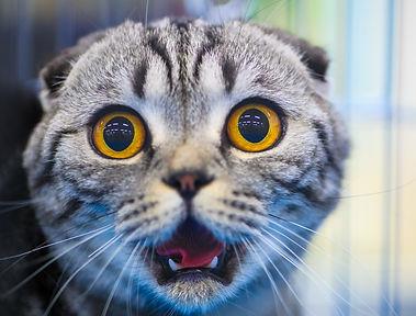 Cute shocked cat.jpg