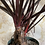 Thumbnail: Philodendron Red Beauty