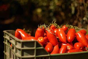 san-marzano-tomater-tomatoe-italy-italia