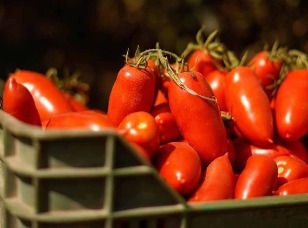 buy-san-marzano-tomater-italy-online.jpg