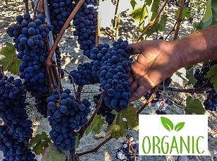 buy-italian-organic-wine-shop-online-del