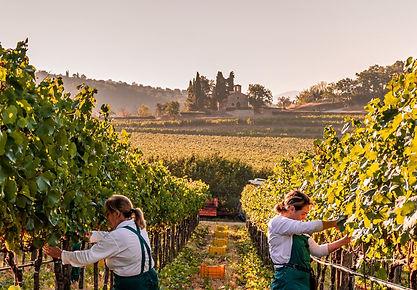 Marchesi-Antonori-Chianti-Wine-7.jpg