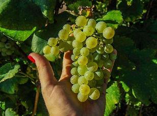 buy-italian-wine-online-shop