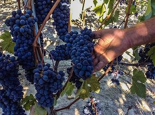italian-wine-shop-online-delivery.jpg