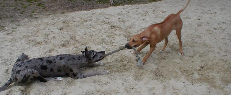 Hampton Roads Dog Trainer Service Dogs Search and Rescue Pet Search Boot Camps Boarding Group Classes Canine Legal Consultations Behavior Modification Agility Conformation Apprentice Training Hampton Roads Chesapeake Hickory VA Beach Norfolk