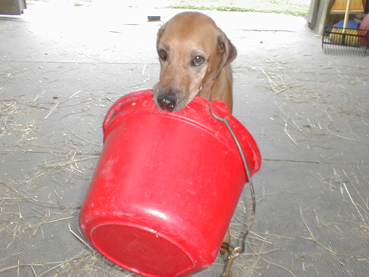 Keno with red bucket.jpg