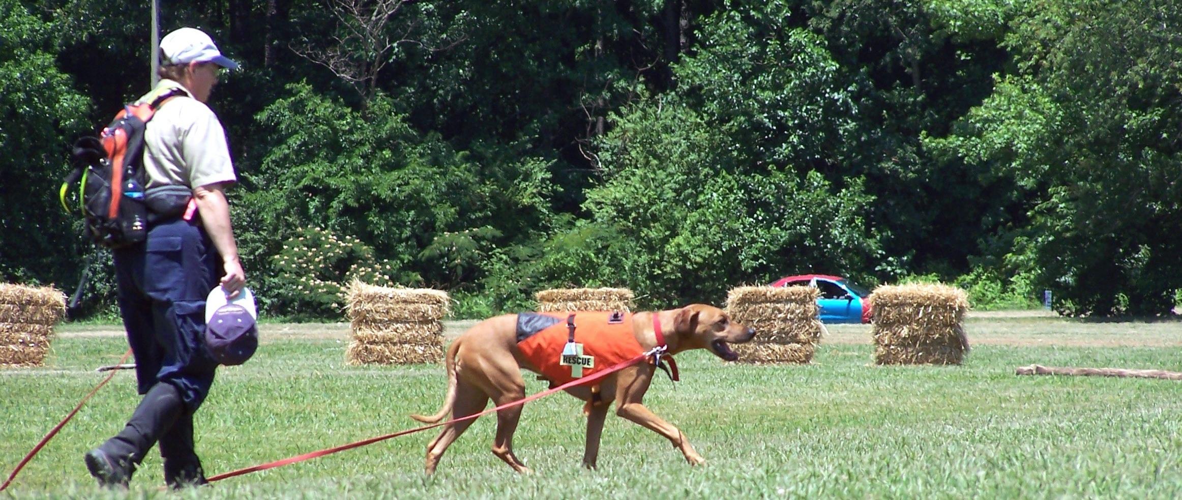 kobe and kim trailing dogdemo 7 6-24-05 (2).jpg