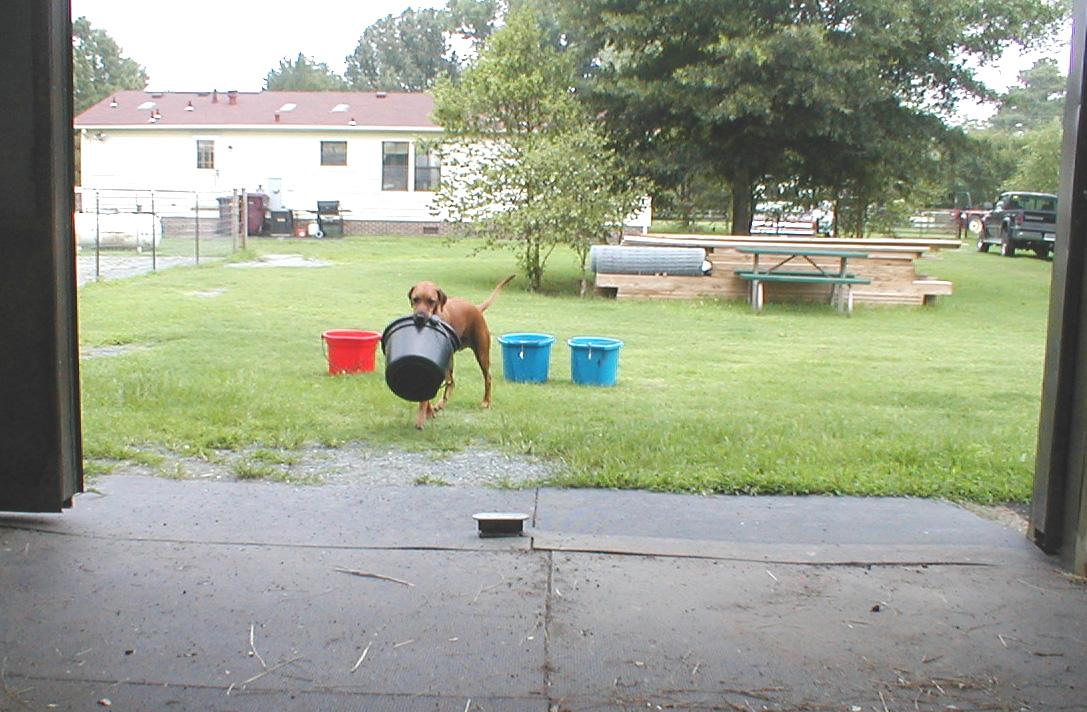Keno brings first bucket.jpg